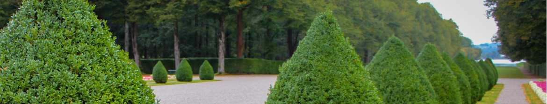 Buy topiary cones online | Tendercare UK