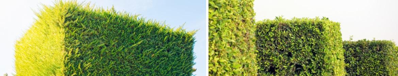 Buy topiary cubes online | Tendercare UK