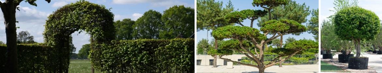 Buy topiary online | Tendercare UK