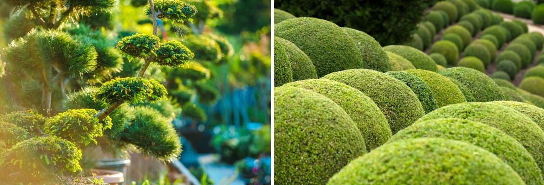Buy Artfully Pruned Plants Online | Tendercare UK