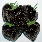 Black strawberries