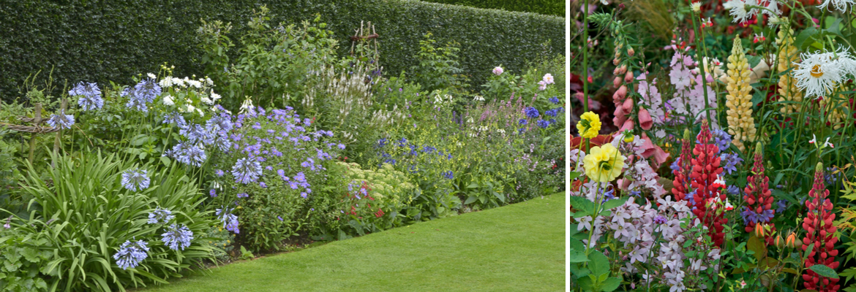 Buy flowering perennials online   Tendercare nurseries in Denham