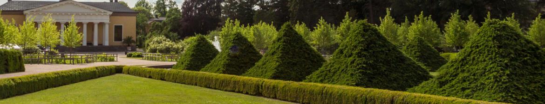 Buy topiary pyramids online | Tendercare UK