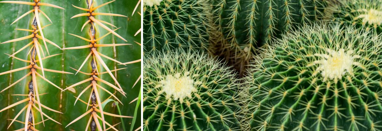 Buy Cactus Online | Tendercare UK
