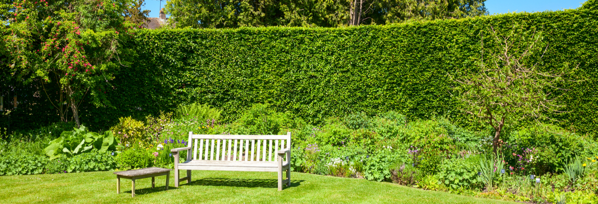 Buy hedge troughs, screens and hedge plants online | Tendercare UK