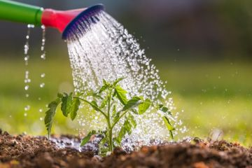 10 tips for waterwise gardening