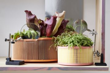 Houseplant of the month: Carnivorous plants