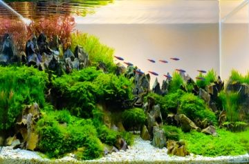 How to aquascape?