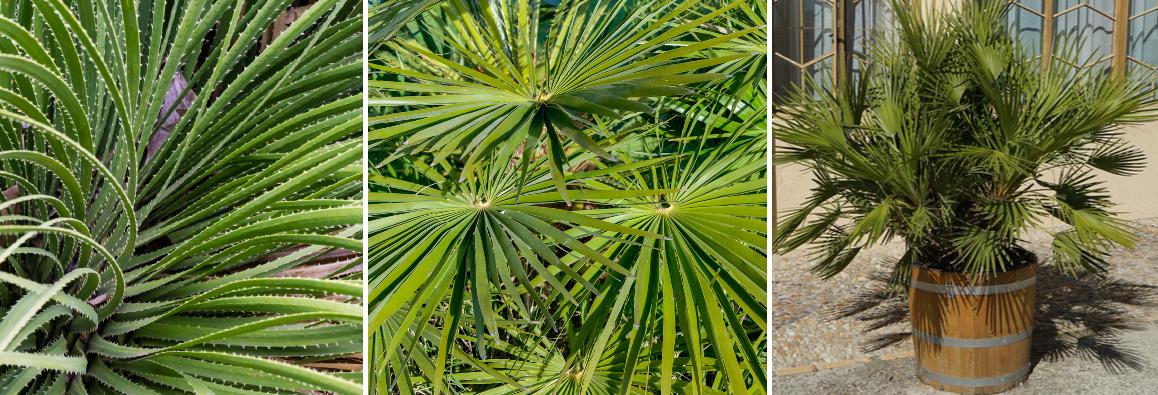 Buy palms online | Tendercare UK