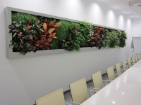 Living Walls:Vertical Gardens