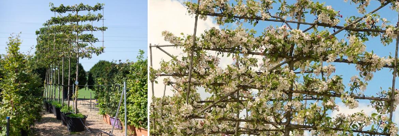 Buy deciduous trees online | Tendercare Nurseries