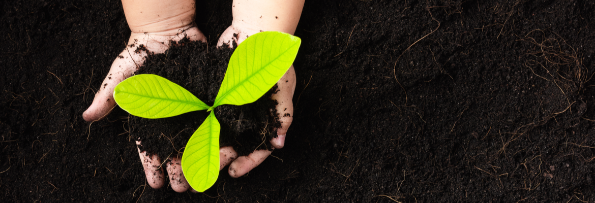 Buy soil improvers and composts