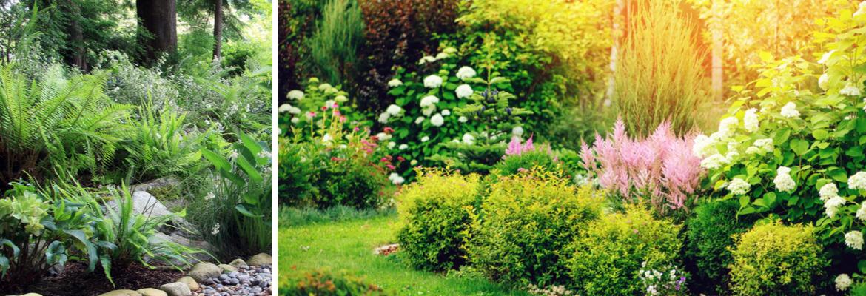 Buy border plants | Tendercare UK