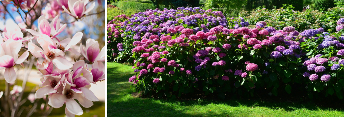 Buy ornamental shrubs | Tendercare UK