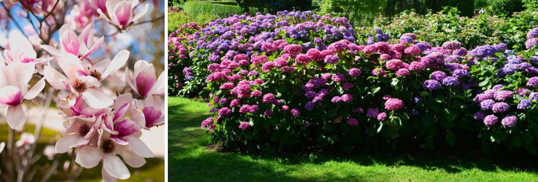 Buy ornamental shrubs | Tendercare UK