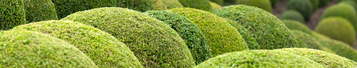Buy topiary balls online | Tendercare UK