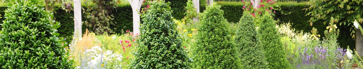 Buy topiary cones online | Tendercare UK