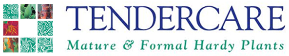 Tendercare Nurseries - Mature & Formal Hardy Plants in Uxbridge.
